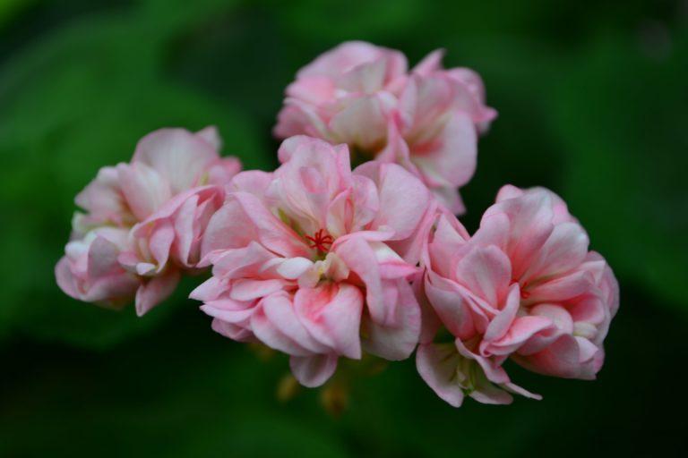 Blooming Tutu