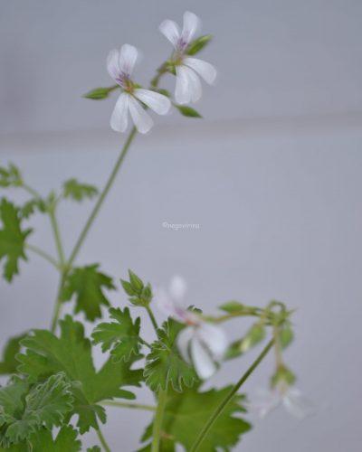 LilianPottinger